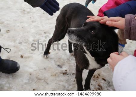Children hands stroking the dog