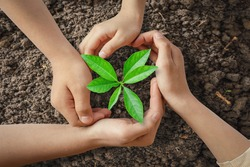 Children hands was gently encircled.Seedlings are growing from abundant soil.