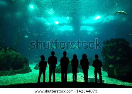 Children in a water park looking at fish through the glass