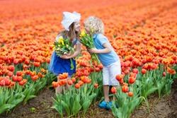 Children in tulip flower field with windmill in Holland. Little Dutch girl and boy in traditional national costume, wooden clogs and hat, with flower bouquet. Kid in tulips fields in the Netherlands.