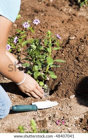 children plant a flower garden as a community activity.