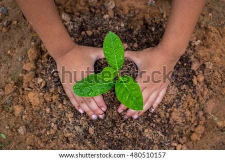 Children plant trees in the garden - Shutterstock ID 480510157