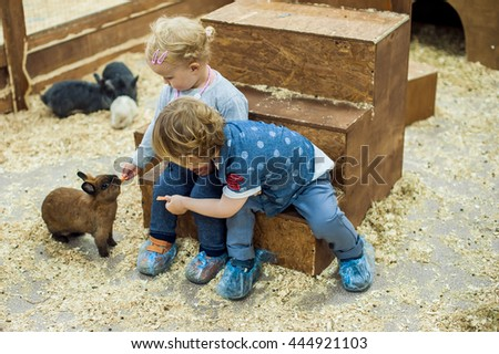 children play with the rabbits in the petting zoo #444921103