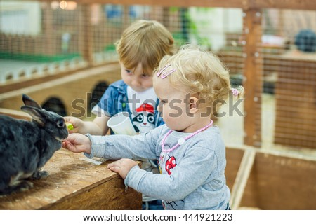 children play with the rabbits in the petting zoo #444921223