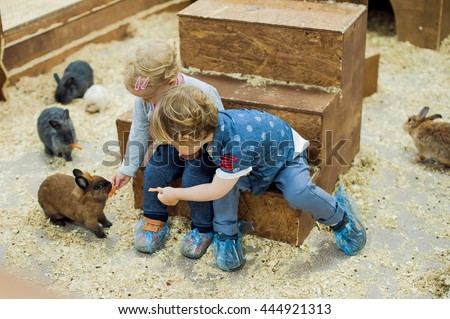 children play with the rabbits in the petting zoo #444921313