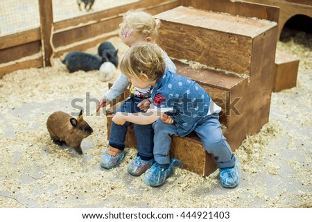children play with the rabbits in the petting zoo #444921403