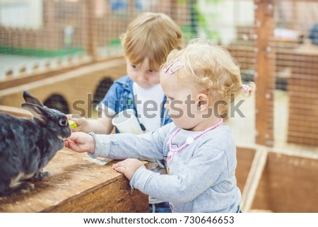 children play with the rabbits in the petting zoo. #730646653