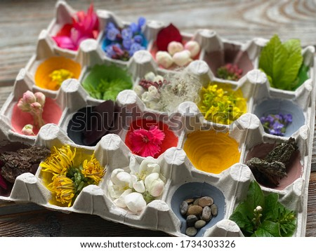 Children's creativity from the processing of the egg carton using natural material.Natural color hunt