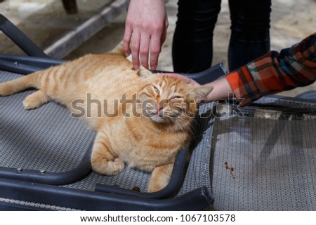 Children's hands are caressed by a red-haired lying cat outdoors #1067103578