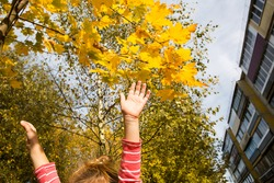 Children's hands are joyfully raised up against the background of a yellow maple tree and an apartment building. The atmosphere of autumn, Indian summer, school-age child. Space for text