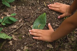 Children's hands close-up on forest ground. A kid plays with a caterpillar on the ground in a forest. A young child explores nature in forest kindergarten or forest nursery.