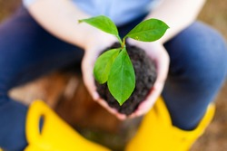 Children's hands hold a green sprout. Planting plants. Caring for vegetables and fruits. horticulture. summer season.