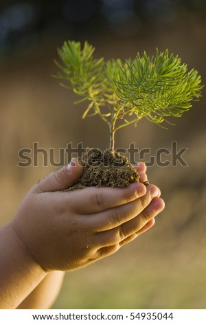 Children's hands holding small plant growing from soil