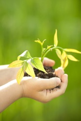 Children`s hands holding young plant against spring green background. Ecology concept