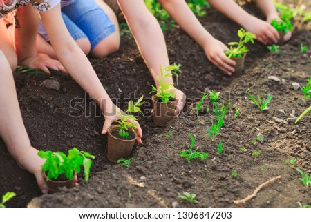 Children's hands planting young tree on black soil together as the world's concept of rescue #1306847203