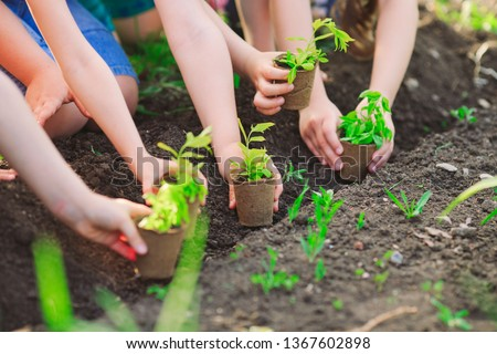 Children's hands planting young tree on black soil together as the world's concept of rescue #1367602898