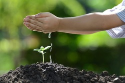 Children's hands watering a young plant