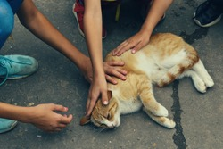 Children stroking a homeless cat on the street. The problem of stray cats in the city. Children and a cat on the road. Love to the animals.