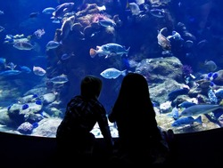 Children watching fish in a large Aquarium