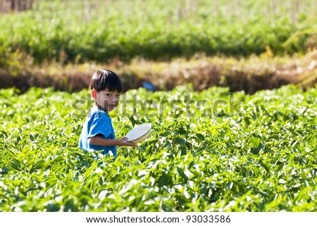 Children working and playing in the park of green peppers - stock photo