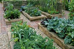 Childrens' edible vegetable garden