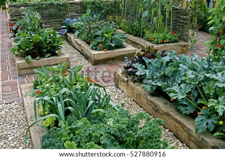 Childrens' edible vegetable garden #527880916
