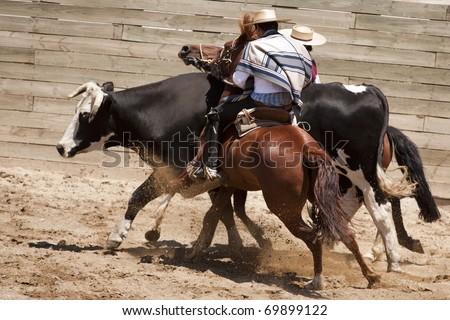 Chilean rodeo - traditional sport of horsemen