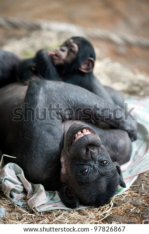 Chimpanzee mother with her cub
