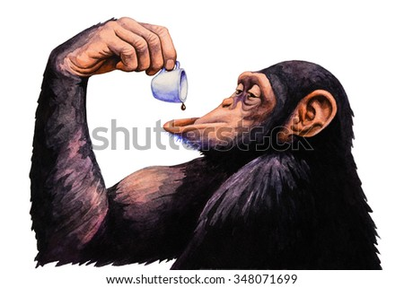 Chimpanzees drink a cup of coffee. Watercolor illustration.