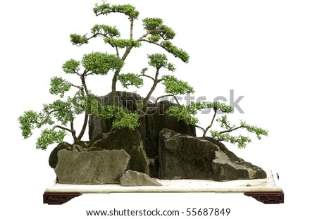 china bonsai - stock photo