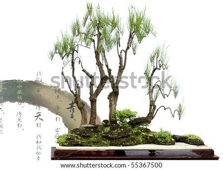 china bonsai with chinese verse