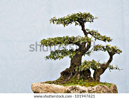 chinese  bonsai at the garden show.
