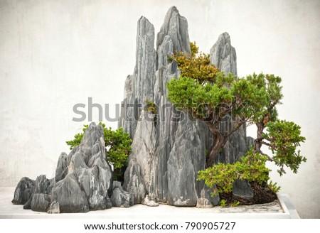 Chinese bonsai, located in Suzhou, Jiangsu, China. #790905727