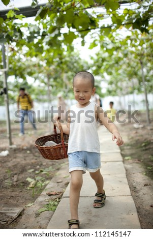chinese boy in the vineyard picking the grape