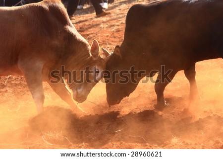 Chinese folk Bull