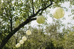 Chinese Laterns Decoration Hanging on Tree Branch with Green Leaves in Garden Photography. Asian Festival Decorative Lamps Sphere. Beautiful Party Ornaments in Forest. Summer Day Nature