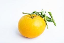 Chinese New Year Tribute Fruit Fortune Mandarin