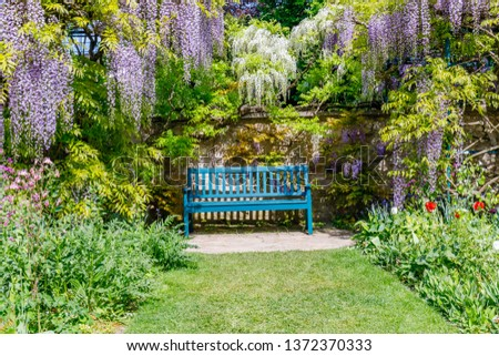 Chinese Wisteria and Japanese Wisteria  blossom #1372370333