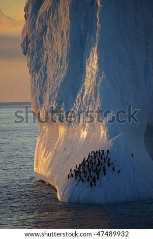 Chinstrap penguins on iceberg in sunset, Antarctica