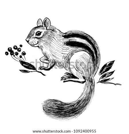 chipmunk black and white drawing