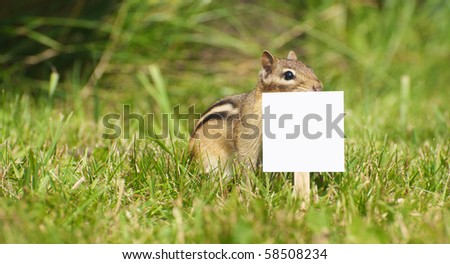 Chipmunk in the grass with a peanut and a blank sign for your text.