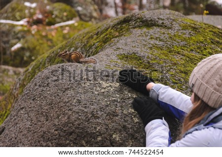Chipmunk on a large stone overgrown with moss in the autumn evening #744522454