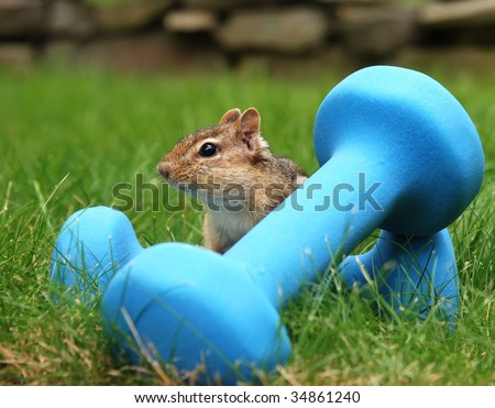 chipmunk with hand weights, ready to exercise