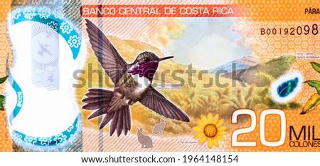 Chispita hummingbird, Portrait from Costa Rica 20,000 Colones 2018-2020 Polimer Banknotes. Zdjęcia stock ©