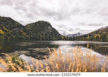 Chitina lake next to McCarthy road, Alaska. Reed, mountains and beautiful clean lake.