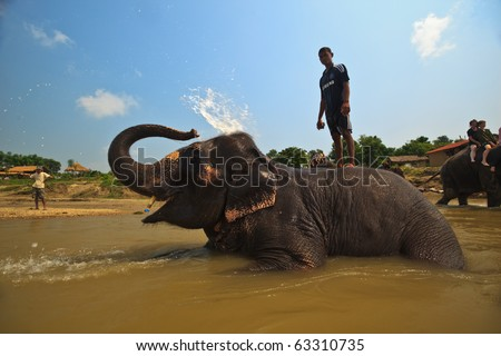 CHITWAN NATIONAL PARK, SAURAHA, NEPAL-CIRCA SEPTEMBER 2009: Unidentified man stands on bathing Asian Elephant (Proboscidea Elephas maximus) circa Sept. 2009 in Chitwan National Park river, Nepal.