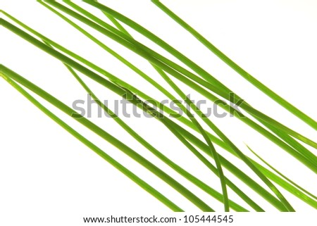 Chive, minimalistic, before a white background