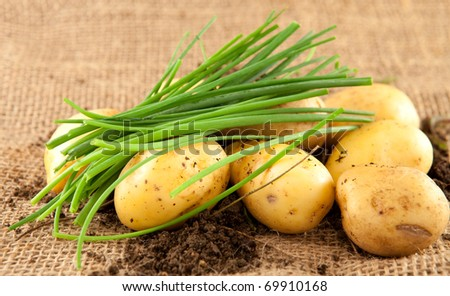 Chives and new potatoes on a jute background
