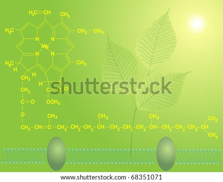 Chlorophyll a - stock photo