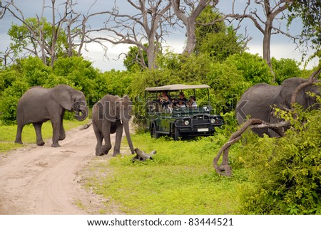 CHOBE, BOTSWANA - JAN 6:Tourists on safari game drive make photo close to wild elephants on January 6, 2008 in the Chobe National Park, Botswana. Game drive is most popular way to see wild animal